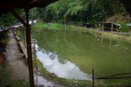 Resep Umpan untuk Sirkulasi Kolam yang Tidak Baik