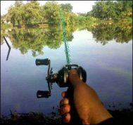 Umpan Ekonomis & Praktis untuk Ikan Mas