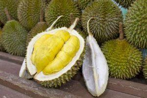 Umpan Mancing Ikan Tombro Menggunakan Buah Durian