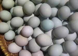 Umpan Mancing Ikan Tombro Menggunakan Telur bebek