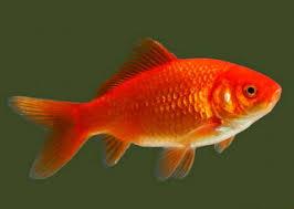 7 Rahasia Yang Jarang Diketahui Orang Saat Mancing Ikan Mas