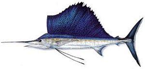 Manfaat dan Khasiat Ikan Marlin Kapak