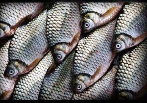Kiat Mancing Ikan Melem