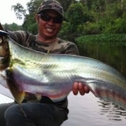 Cara Mancing Ikan Culi