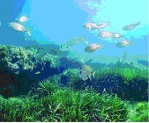 3 Habitat Ikan Berdasarkan Jenis Air