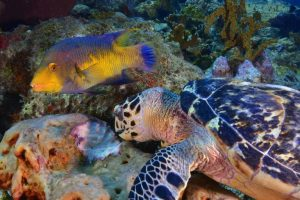 3 Karakteristik Ikan Berdasarkan Habitat dan Kedalaman Air
