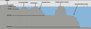 Cara Mengetahui Spot Tempat Banyak Ikan Di Air Asin/Laut