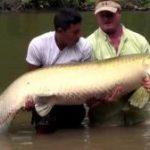 Mancing Di Sungai Amazon