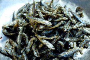 Bilih, Ikan Endemik Danau Singkarak Sumatera Barat