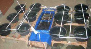Cara Budidaya Ikan dengan Sistem Resirkulasi Bagi Pemula