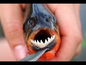 Fungsi dan Jenis Kawat Neklin untuk Memancing Ikan Bergigi Tajam