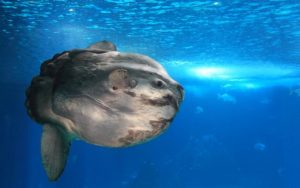 Hewan air yang terancam punah di Indonesia