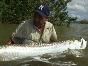Manfaat dan Khasiat Ikan Tarpon