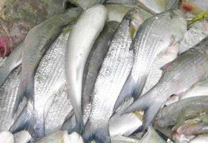 Manfaat dan Khasiat Ikan Air Tawar