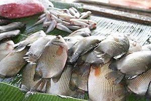 Manfaat dan Khasiat Ikan Biawan