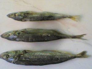 Manfaat dan Khasiat Ikan Klotok