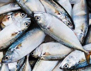 Manfaat dan Khasiat Ikan Mackerel
