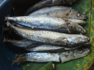 Manfaat dan Khasiat Ikan Pindang