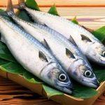 Tips Menjaga Kesegaran Ikan Tangkapan Ala Jepang (di Fukui,Obama)