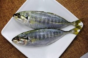 Manfaat Dan Khasiat Ikan Selar Batang