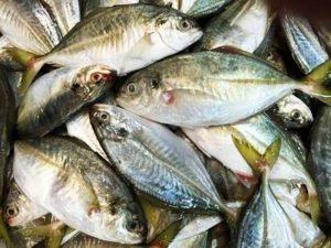 Manfaat dan Khasiat Ikan Selar Bentong