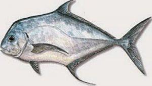 Manfaat dan Khasiat Ikan Terpony