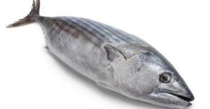 5 Bahaya Ikan Tongkol Wajib Diwaspadai