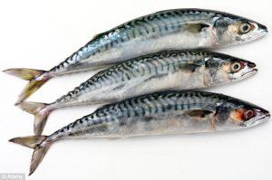 Jenis-jenis Ikan yang Perlu Diwaspadai bila akan dikonsumsi
