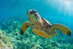 Longline Fishing, Metode Memancing yang Mengancam Kehidupan Makhluk Laut yang dilindungi