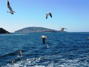 Memprediksi Keberadaan Ikan di Laut Berdasarkan Gejala Alam