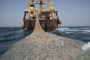 Penangkapan Ikan yang Berkelanjutan