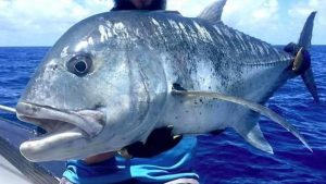 Tips Memancing Giant Trevally