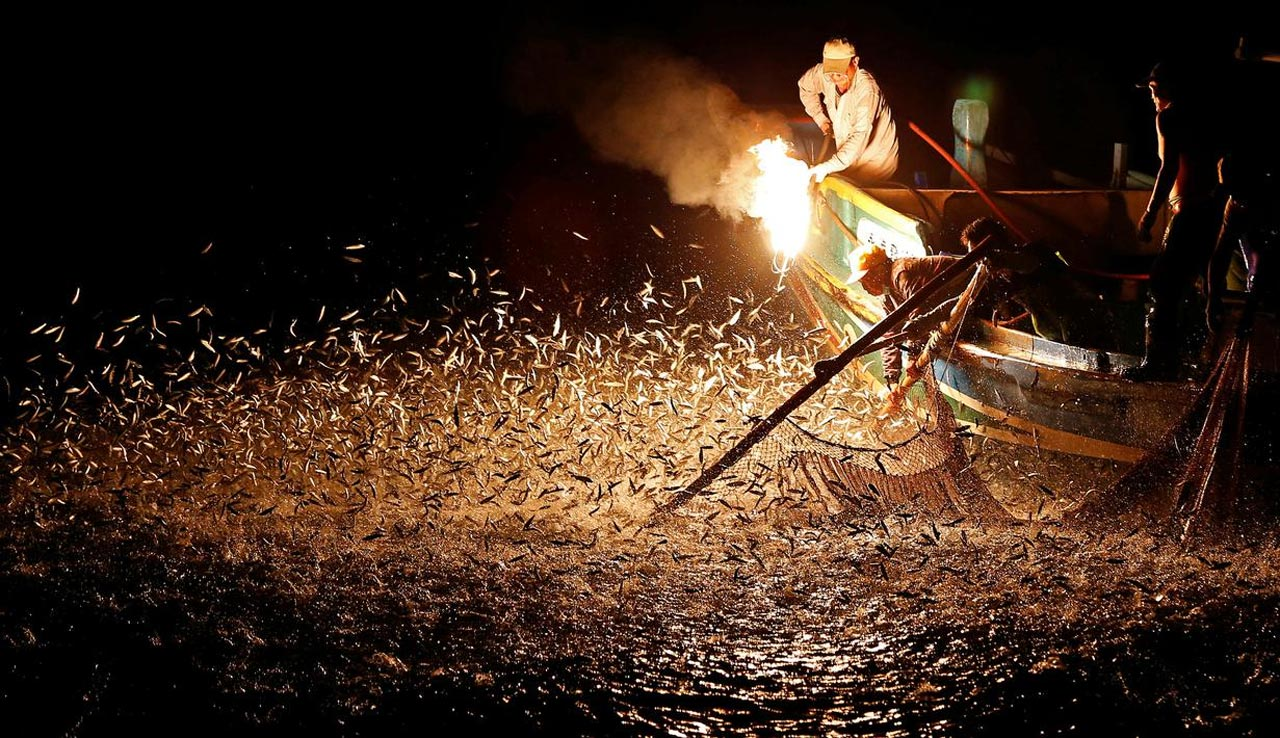 Tradisi Mancing Ikan Sardine Menggunakan Tongkat Api di Negara Taiwan