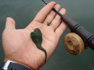 Umpan Freshwater ala Ayi Kroto
