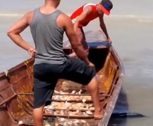 memancing piranha