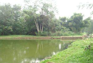 Ngoyor di Mahoni