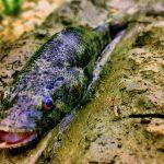 Tips Sukses Mancing Ikan Bloso