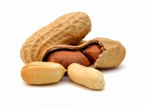 Umpan gt Bawal kacang sangrai