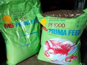 Umpan ikan patin menggunakan pf 1000