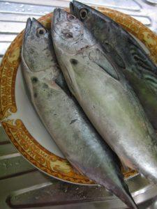 Umpan Ikan Patin Menggunakan Pindang Tongkol