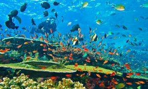 Makhluk Laut Cantik Berbahaya Dan Mematikan