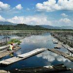 Spot mancing ikan nila di warung apung Jombor Klaten