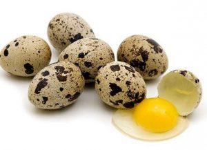 Umpan ikan nilem menggunakan telur puyuh