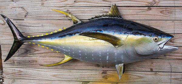 Casting yellowfin tuna dengan umpan soft lure